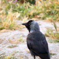 Неизвестная мне птица :: Владимир Сарычев