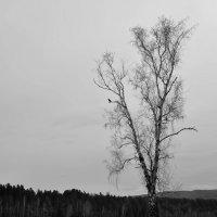Весна :: Ольга Антонюк