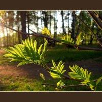 Теплый майский вечер... :: Нина Федорова