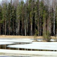 Озеро :: Наталия Зыбайло