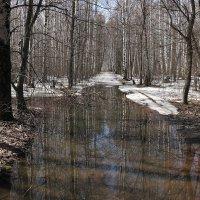 В весеннем лесу :: Николай Белавин