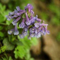 Цветок :: Надежда Боровая