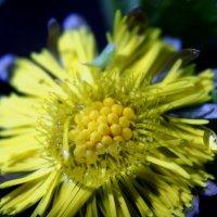 Цветы весной :: Marina Marina