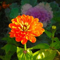 Цветок_1 :: Oleg Tumakov