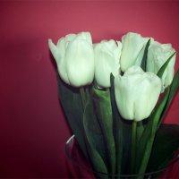 Тюльпаны :: Victoria Lugovaya