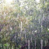 крупный дождик :: Дмитрий Потапов