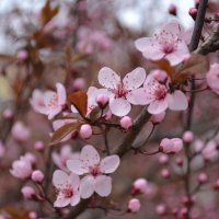 Долгожданная весна :: Ольга Рыбакова