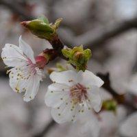 И к нам наконец весна пришла! :: Ольга Рыбакова