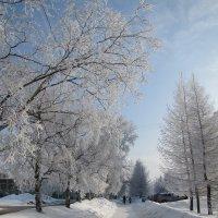 снег :: Оксана сухарева