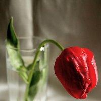 Тюльпан :: Elena Bardizhka