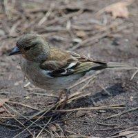 Птица :: Yury Petrov