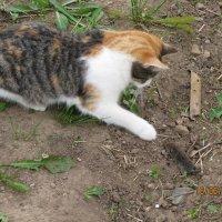 кошка с мышкой :: Оксана сухарева