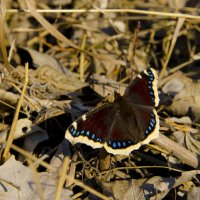 Бабочка :: Наталья Журавлева