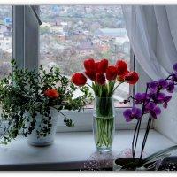 Моё окно :: Александр Гапоненко