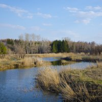 Весна :: Наталья Журавлева