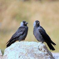 Две неизвестные мне птицы. :: Владимир Сарычев