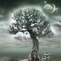 Тайна старого дерева :: Вероника Касаткина