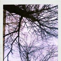 Polaroid :: Маргарита Волк