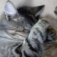 кошка,  которой мешали спать посетители магазина :: valeriy g_g