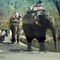 слоны на дороге :: йогеш кумар