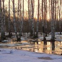 Весной на закате :: Николай Белавин