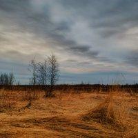 Апрельское утро 3. :: Andrei Dolzhenko