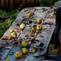 Заброшенный сад    (Литва) :: Георгий Столяров