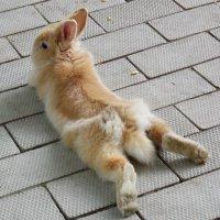 Кролик :: Андрей Meльник