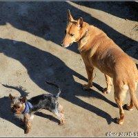 Хозяин! А это тоже собака?? :-)) :: Виктор Марченко