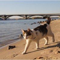 Схожу-ка я на рыбалку!! :: Виктор Марченко