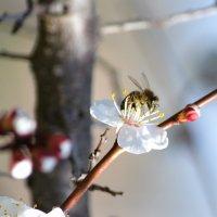 весна :: Елена Течиева