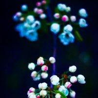 весна :: Инна Соколова
