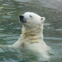 Медвежонок :: Виктория Чурилова