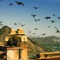 Амбер форт, Джайпур :: йогеш кумар