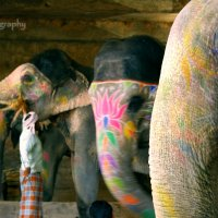 Слоны :: йогеш кумар