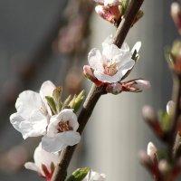 Весна. :: Казимир Буйвис