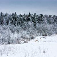 Зимний лес :: Alexey Malishev