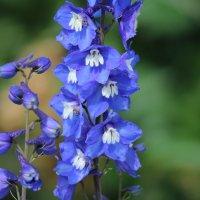 очень красивый цветок. :: Виктория Левина