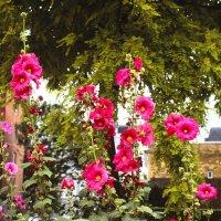 flowers :: Дмитрий Ланковский