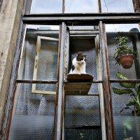 Кошка на окошкЕ :: Алексей Астафьев