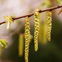 Весна 3 :: Андрей Бойко