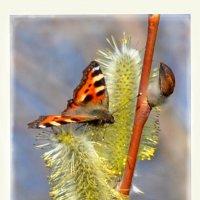 Весенняя бабочка :: Диана Задворкина