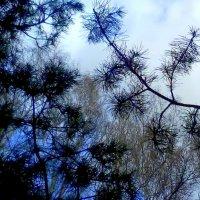 Смешанный лес :: Люба Гительман