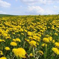 ароматы цветущих полей :: *tamara* *****