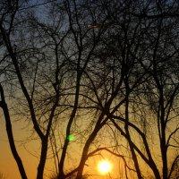 закат :: Анна Бурылова