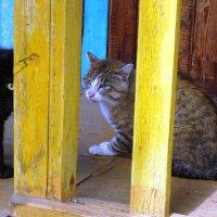 кошачьи споры :: Юлия Sun
