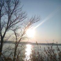 Зимний Дунай :: Натали Жоля