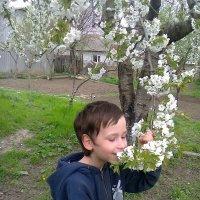 Аромат весны :: Натали Жоля