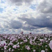 красоты земли нашей :: *tamara* *****