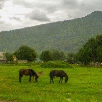 Ливень в Хамышках. :: Юлия Бабитко
